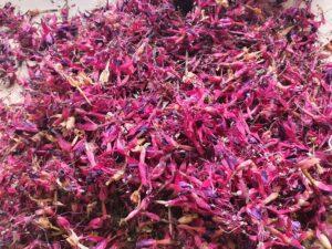 Freshly dried fuschia for Cape Clear Island Gin